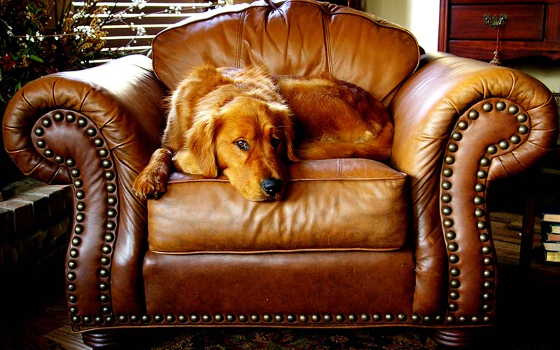 Canine Chair Cushion 546228